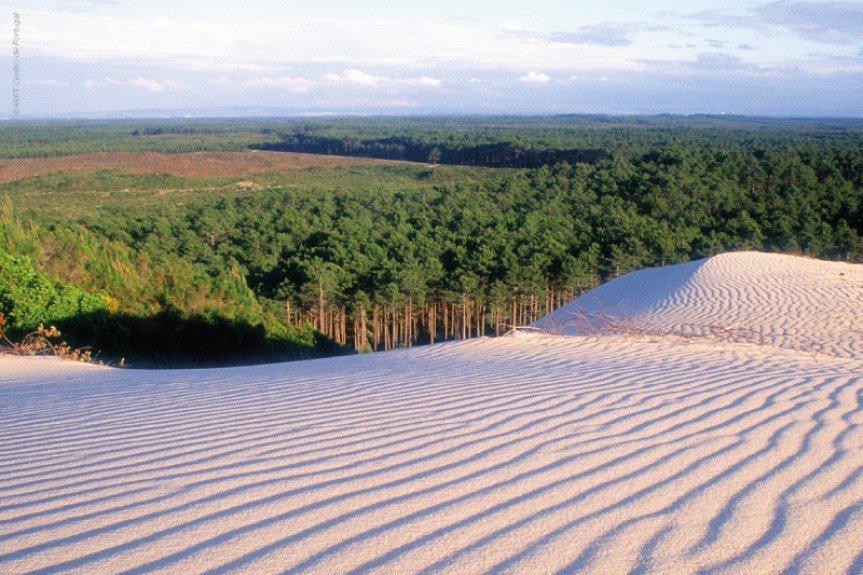 Hoteles Eurosol apoyan la reforestación de Portugal