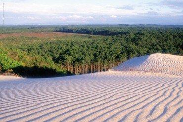 Hotéis Eurosol apoiam a reflorestação de Portugal
